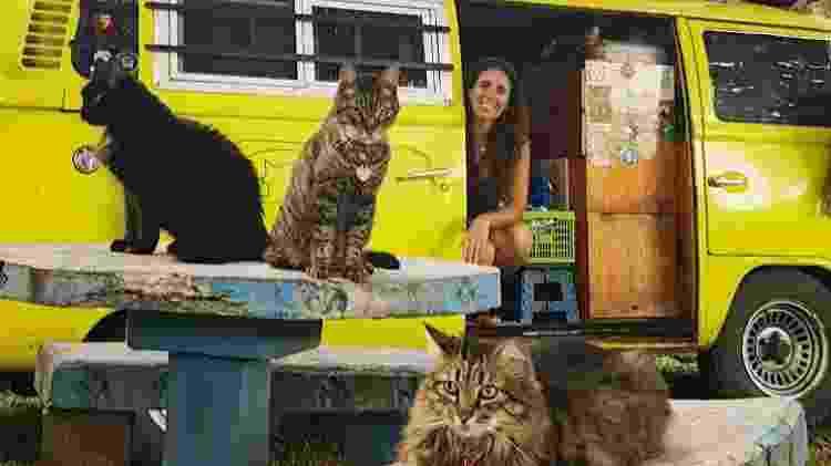 Os viajantes felinos de Xino Xano - Reprodução/Instagram - Reprodução/Instagram