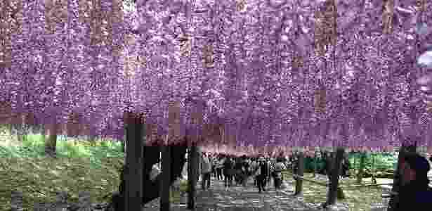 Há dois túneis de flores no jardim japonês, um deles com 220 metros - そらみみ/Creative Commons