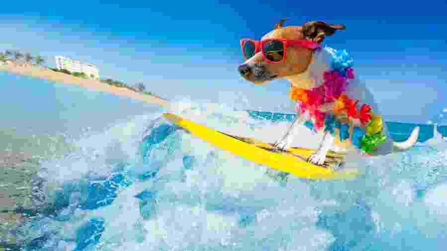 Quer ter uma experiência fofa nas férias? Encontre uma praia que seja palco para o surfe canino - damedeeso/Getty Images/iStockphoto