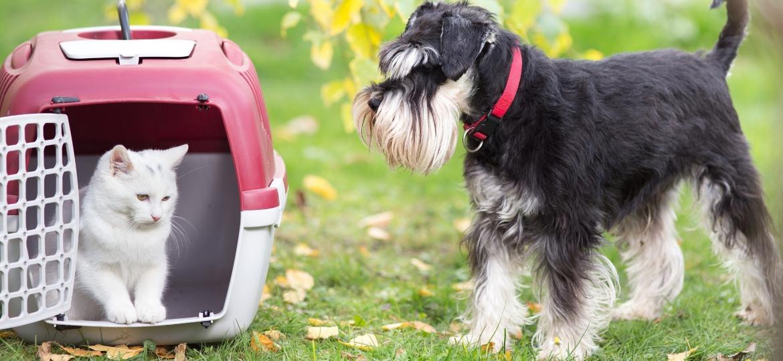 De uma ida ao veterinário a uma viagem: como transportar seu pet em segurança - Getty Images/iStockphoto