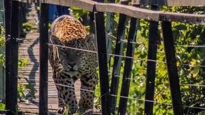 Reprodução/ Edir Alves/ Fazenda San Francisco Pantanal