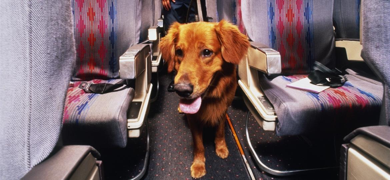 Viagem com pet: taxa é definida pela companhia aérea - Billy Hustace/Getty Images