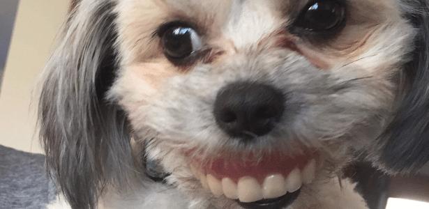 A cadelinha Maggie exibiu um sorriso para lá de simpático para as câmeras