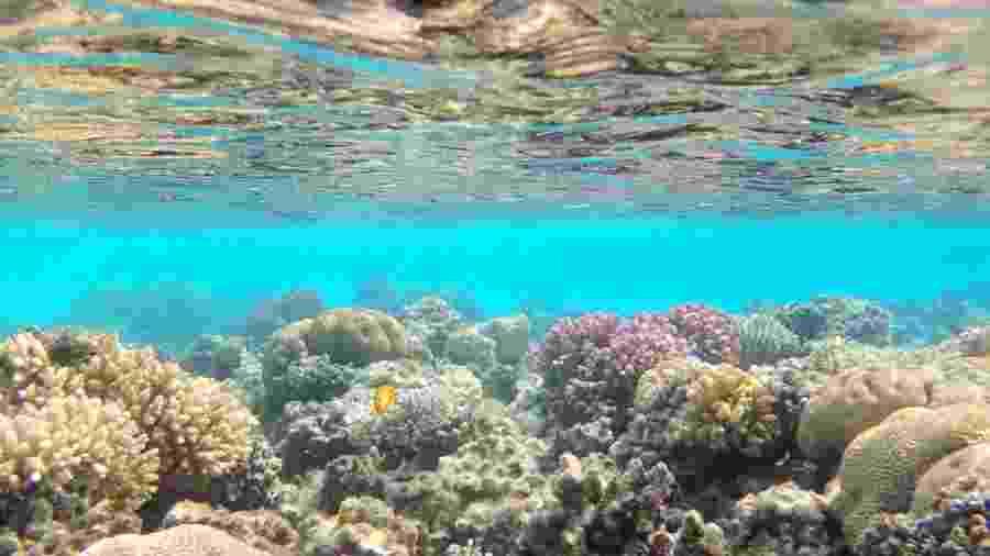 Corais no Mar Vermelho, na costa do Egito - iStock