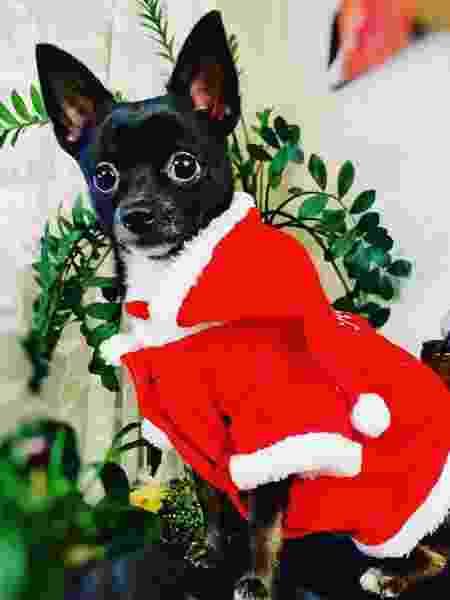 Donos de pets capricham no look de Natal de seus bichanos - Reprodução/@poppy310519