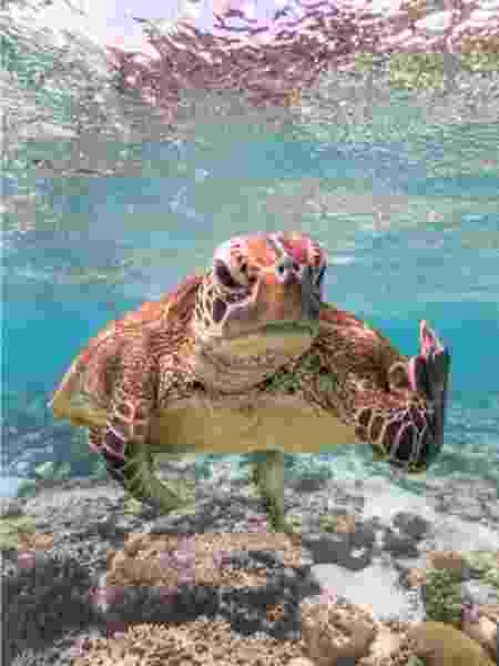 tartaruga - Mark Fitzpatrick/Comedy Wildlife Photo Awards 2020 - Mark Fitzpatrick/Comedy Wildlife Photo Awards 2020
