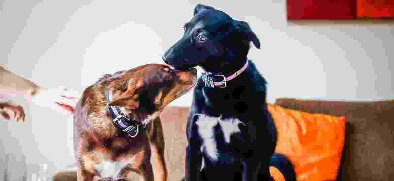 As cachorras Mel e Cacau se adaptaram e convivem em harmonia: Mel chegou dois anos depois à família - Edson Lopes Jr./ UOL
