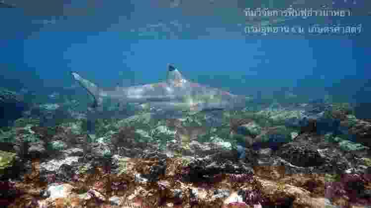 Após o fechamento, tubarões-de-pontas-negras-de-recife começaram a aparecer na baía - THON THAMRONGNAWASAWAT/BBC - THON THAMRONGNAWASAWAT/BBC
