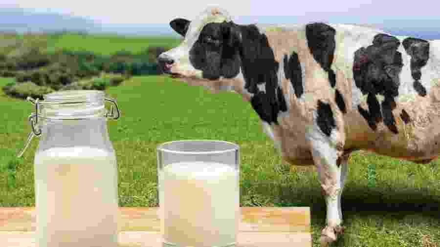 Nenhuma vaca foi ordenhada para produzir o queijo - iStock