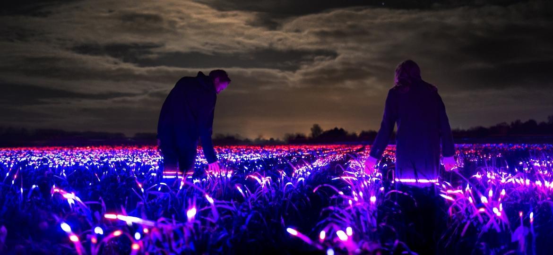 A instalação Grow, na Holanda - Divulgação