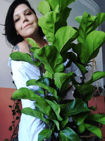 Rafaella Ribeiro e sua Ficus Lyrata - Arquivo pessoal - Arquivo pessoal