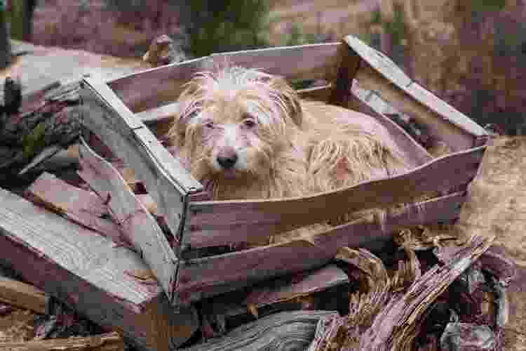 Não zelar pela higiene do animal é um atentado à sua saúde e bem estar - Getty Images/iStockphoto - Getty Images/iStockphoto