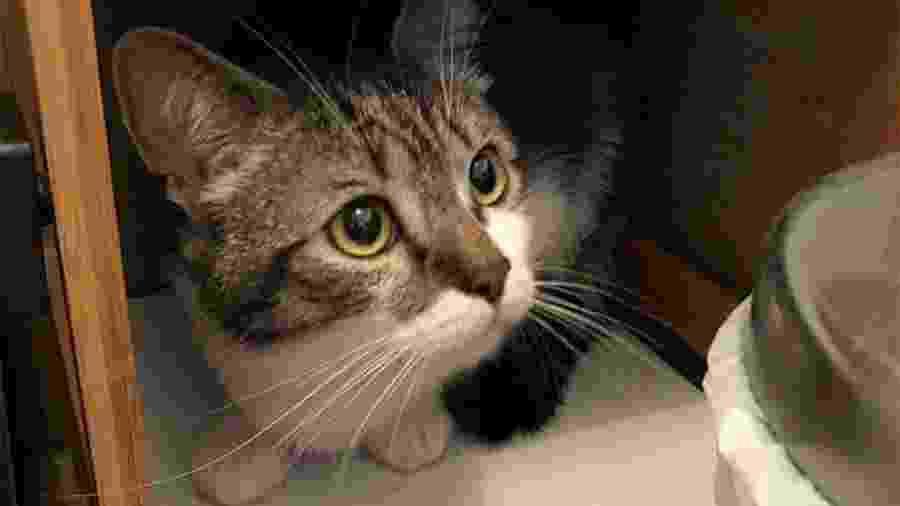 O gato Milo em foto divulgada pela dona, Molly McFadden  - Reprodução/Facebook