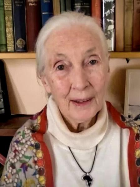 Jane Goodall durante entrevista no TED2020 - Divulgação/TED