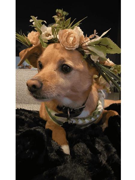 cão - Reprodução/Instagram - Reprodução/Instagram