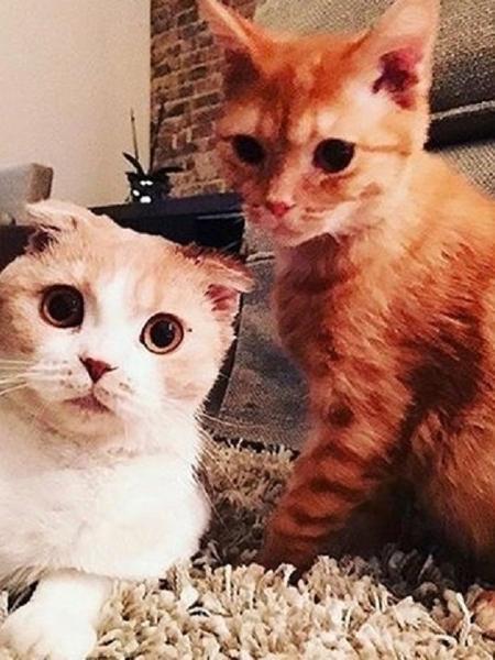 Os gatos de estimação de Ed Sheeran - Reprodução/Instagram