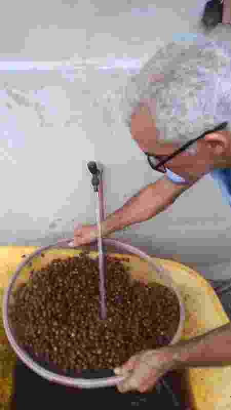 """Assim como na produção cafeeira, há a seleção dos """"grãos"""" - Arquivo pessoal - Arquivo pessoal"""