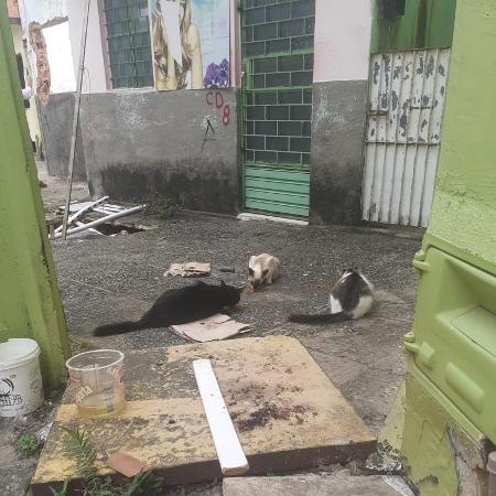 Gatos em bairros abandonados de Maceió - Divulgação