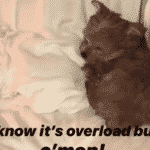 Hailey Baldwin e Justin Bieber apresentam novo bichinho de estimação, Oscar - Reprodução/Instagram