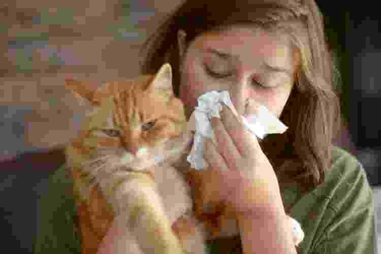 Um em cada cinco humanos adultos têm alergia a gatos - Getty Images/iStockphoto - Getty Images/iStockphoto