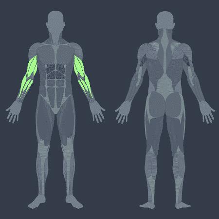Apesar de ter como foco principal músculos do braço, a rosca direta exige indiretamente a musculatura do core, que estabiliza o tronco durante o movimento - iStock/ Arte UOL VivaBem