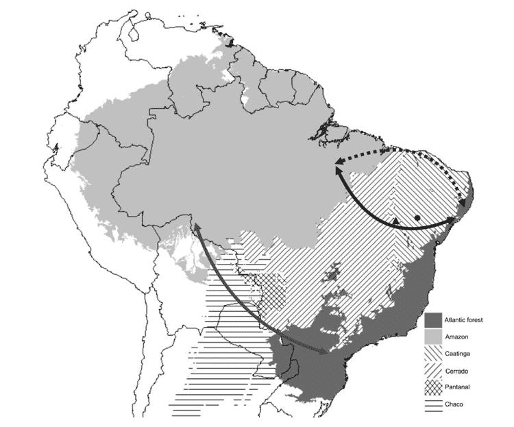 Mapa mostra onde foram as possíveis ligações entre a Amazônia e a Mata Atlântica no passado, sendo a ligação ocorrida há milhões de anos indicada pela seta escura de baixo, e a mais recente (milhares de anos), indicada pela seta escura de cima - Henrique Batalha Filho - Henrique Batalha Filho