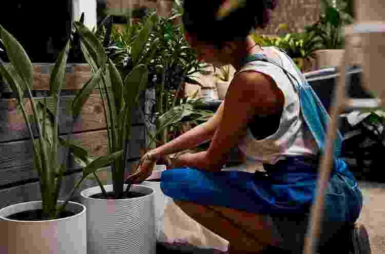 Adubagem é ideal para repor os nutrientes das plantas - Getty Images - Getty Images