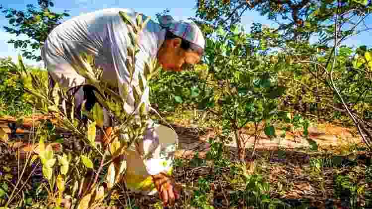 As comunidades tradicionais que baseiam seu sustento em torno da rica diversidade de plantas do Cerrado também são alguns dos melhores guardiões da conservação do bioma, dizem os especialistas. - Bento Viana/ISPN - Bento Viana/ISPN