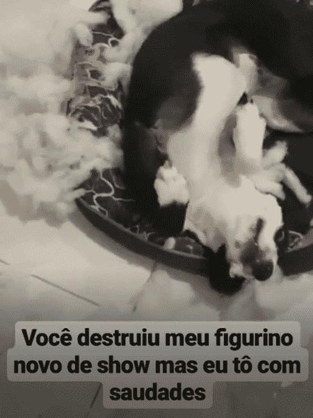 O cachorrinho de Anitta - Reprodução/Instagram - Reprodução/Instagram