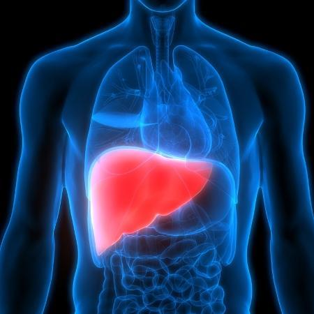Hepatite é toda infecção ou inflamação no fígado, que pode ser provocada por vírus, obesidade, consumo de álcool - iStock