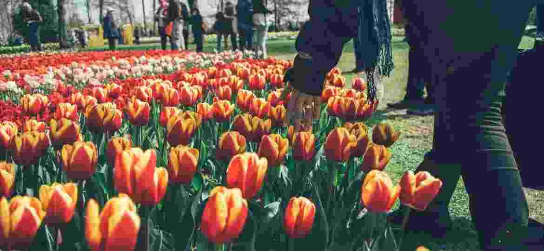 Keukenhof, na Holanda, é um dos jardins mais belos do mundo que pode ser explorado online - Mario Gogh/Unsplash