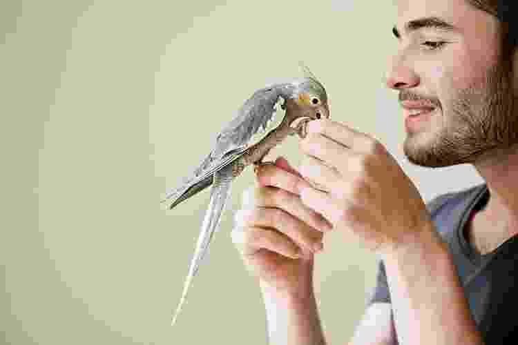 Mesmo em gaiolas, aves gostam de ter companhia e são muito inteligentes - Getty Images/iStockphoto - Getty Images/iStockphoto