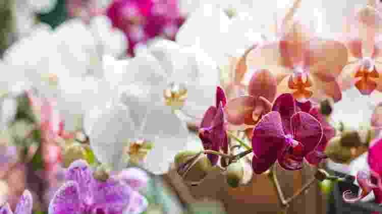 Orquídeas - Getty Images/iStockphoto - Getty Images/iStockphoto