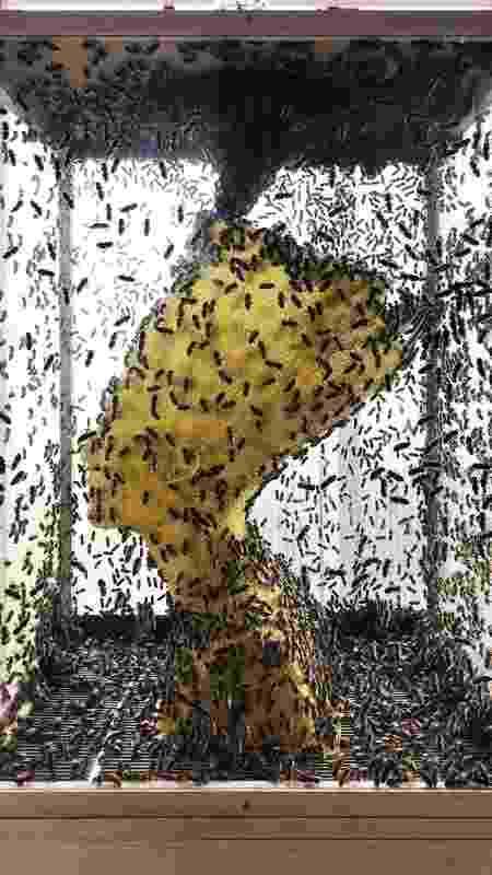 abelhas - Reprodução - Reprodução