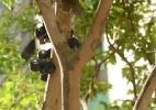 Paisagista ensina a cuidar de árvores frutíferas em vasos - Karime Xavier/Folhapress