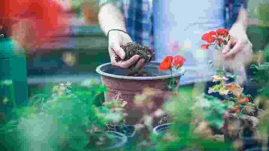 Jardinagem, plantar - Getty Images