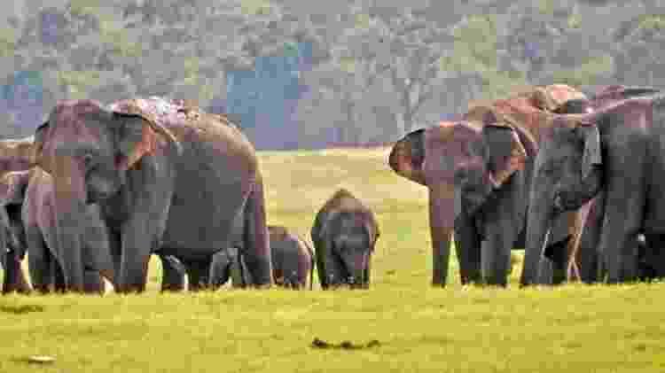 A vida selvagem no Sri Lanka, além das paisagens paradisíacas, tornaram o país um refúgio para os turistas - BBC
