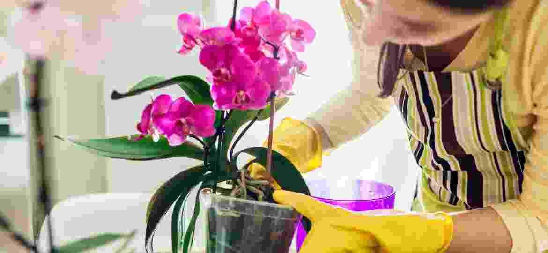 Você sabia que cheirar o vaso de orquídea é o primeiro passo para decidir pela troca de recipiente? - Getty Images