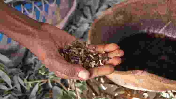 A utilização da casca do café pode colaborar com o meio ambiente, já que elas não serão mais descartadas - iStock