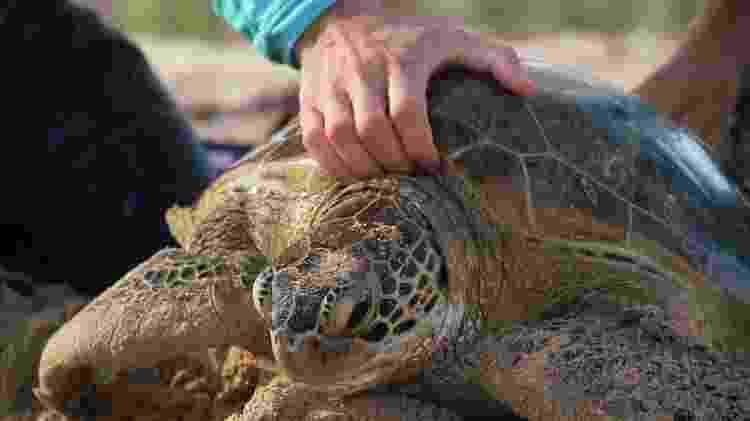 Captura intencional de tartarugas, projeto ambiental encabeçado pelo Tamar, em Fernando de Noronha - Eduardo Vessoni - Eduardo Vessoni