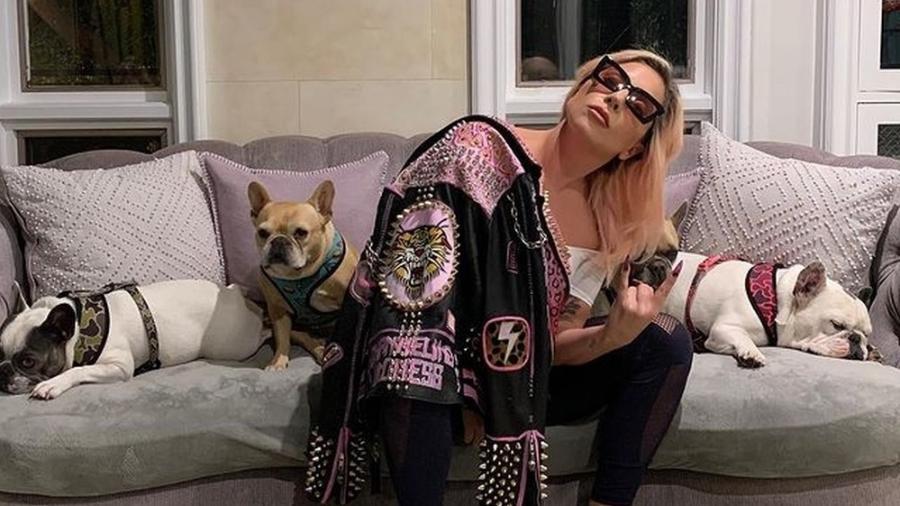 Lady Gaga posa com três de seus cachorros - Reprodução/Instagram