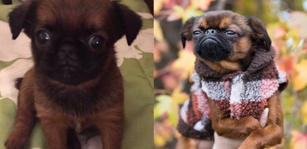 Modelo americana compartilhou a evolução do seu próprio cão