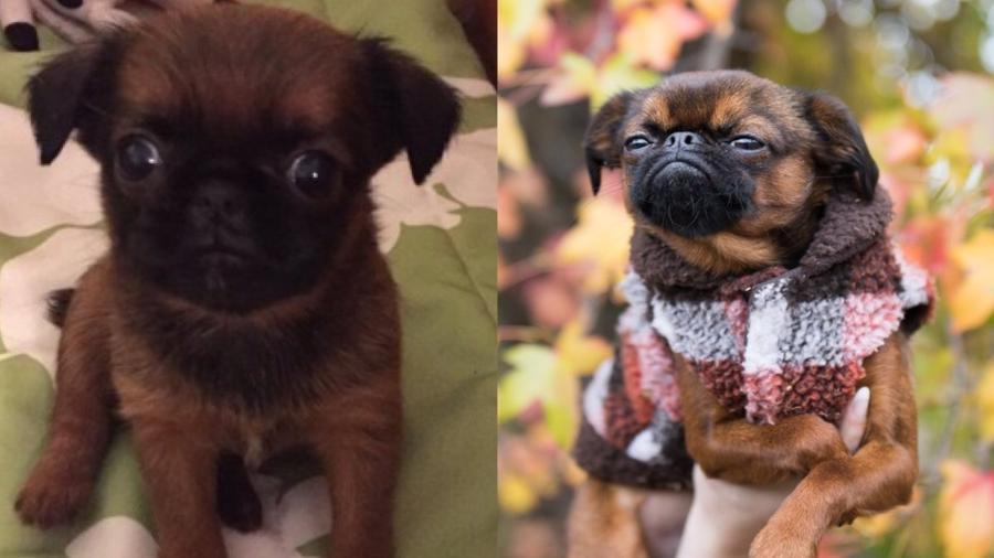 Modelo americana compartilhou a evolução do seu próprio cão - Reprodução/Twitter.com/nicole_dutter