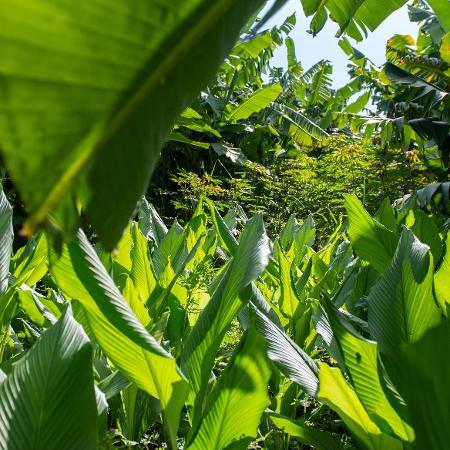 Área recuperada com agrofloresta em Jaguariúna (SP) - Flavio Moraes/UOL