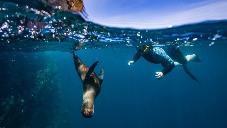 Mar de Galápagos - Andrew Peacock/Getty Images