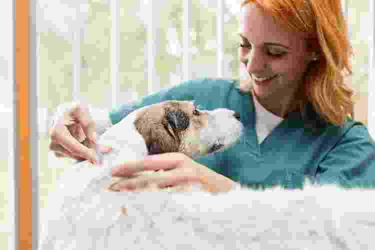 Para saber quais vacinas dar ao seu pet, consulte um veterinário - Getty Images/iStockphoto - Getty Images/iStockphoto