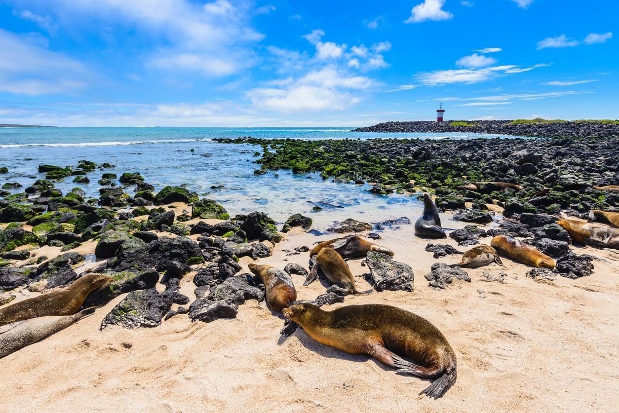 Ilhas Galápagos: Equador controla vazamento de diesel