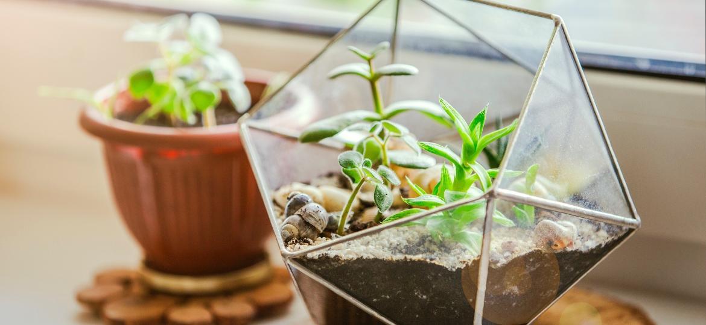 Terrários podem ser encontrados em diversas formas no mercado e adicionam cor e uma forma mais prática para o cuidado das plantas em casa - Getty Images