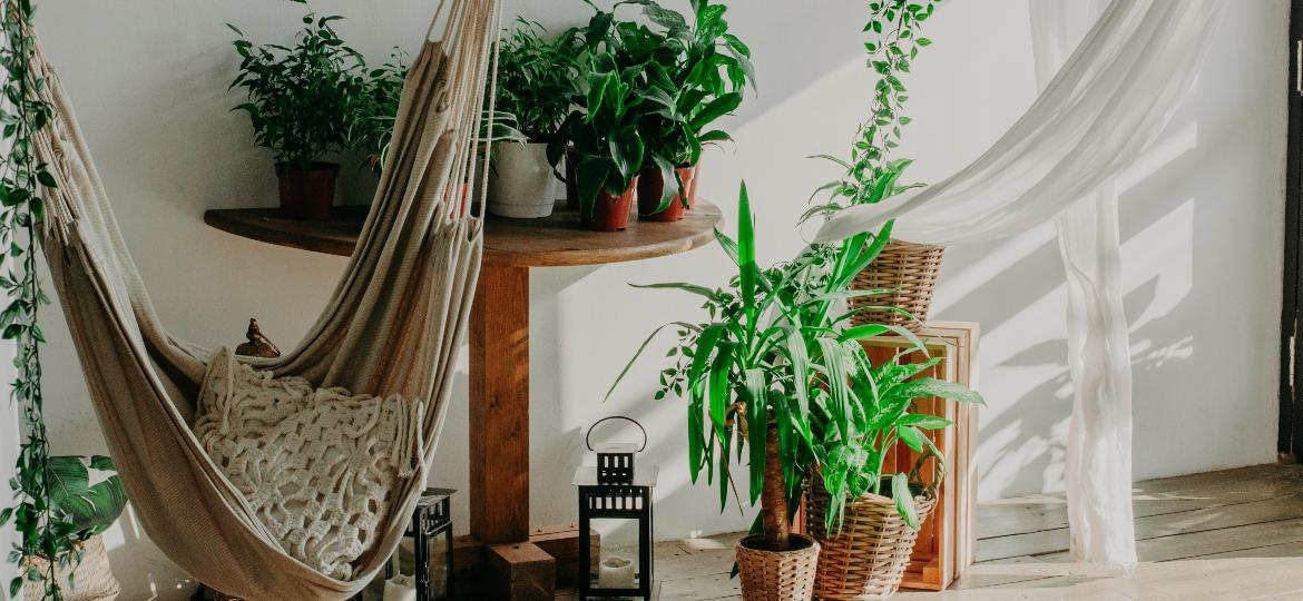 Plantas que não precisam de luz direta são ideais para aqueles cantinhos com mais sombra no apê - iStock