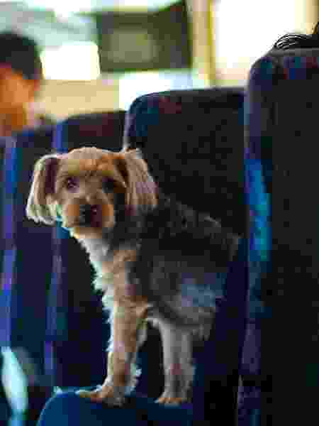 Pet ônibus - Francesca Russell/Getty Images - Francesca Russell/Getty Images